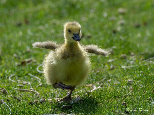 Run, Baby, Run!