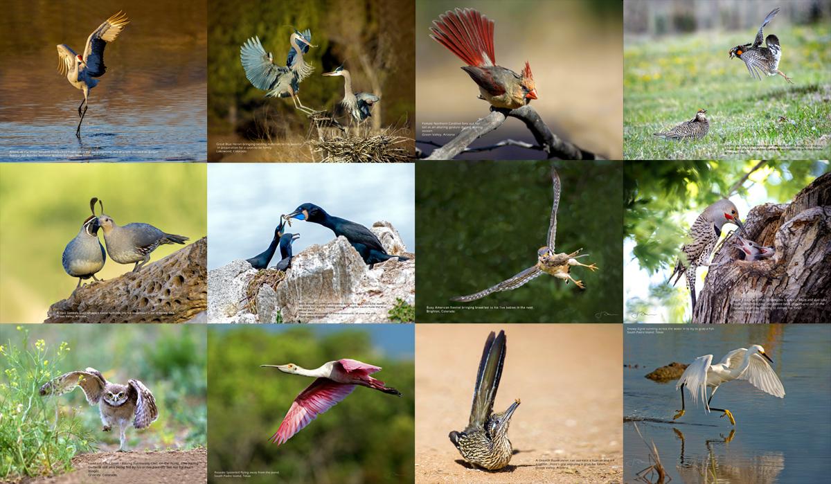 2018 Bird Calendar - January through December