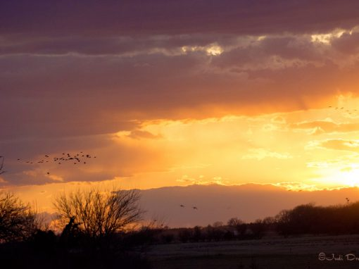 Sunset with Flying Sandhill Cranes