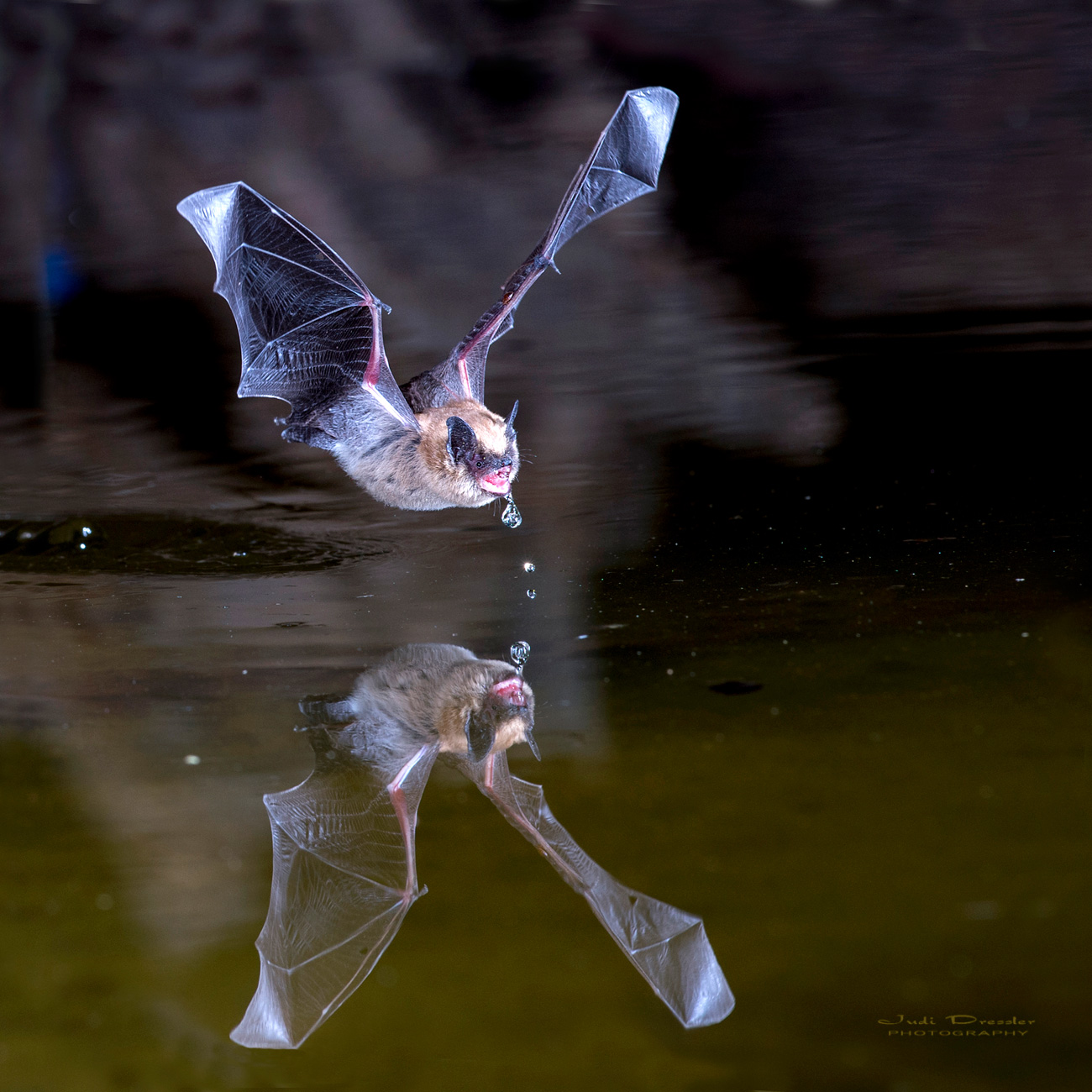 Bat and Reflection