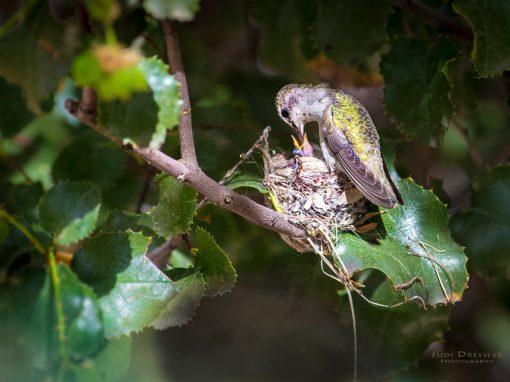 Hummingbird Feeding Time!