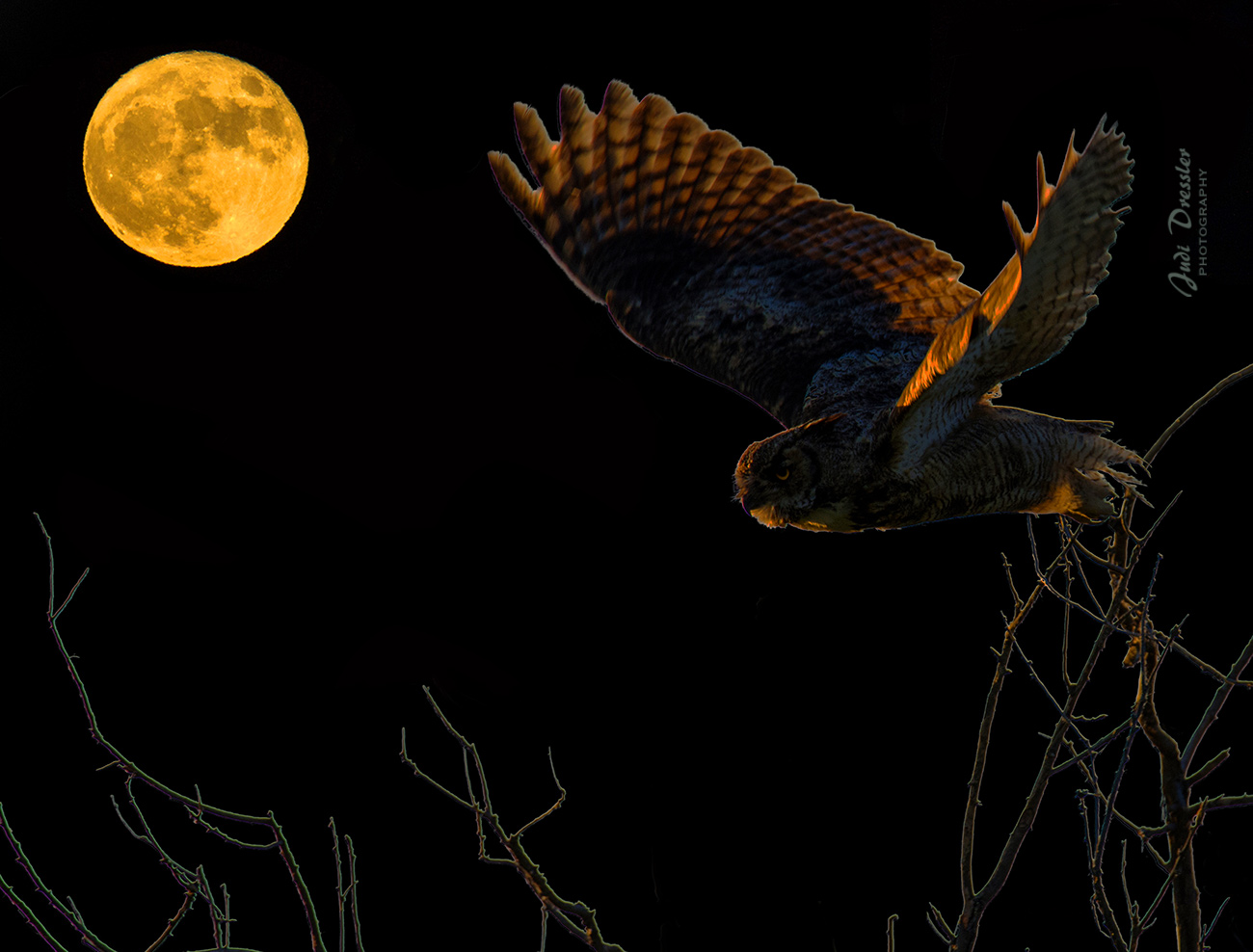 Moonlit Great Horned Owl