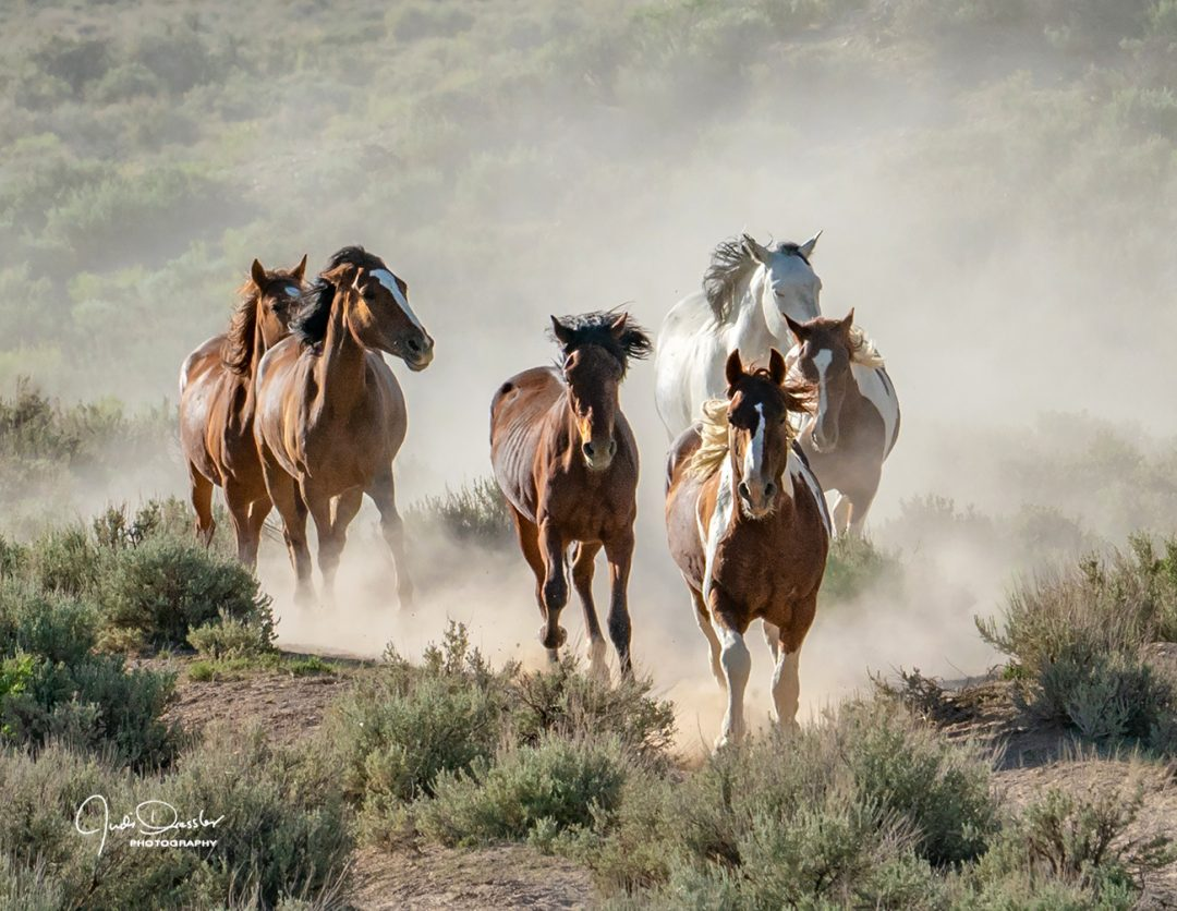 Racing to the Water Hole