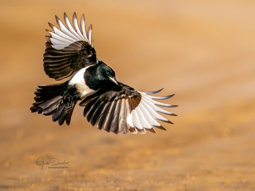 Magpie Beauty