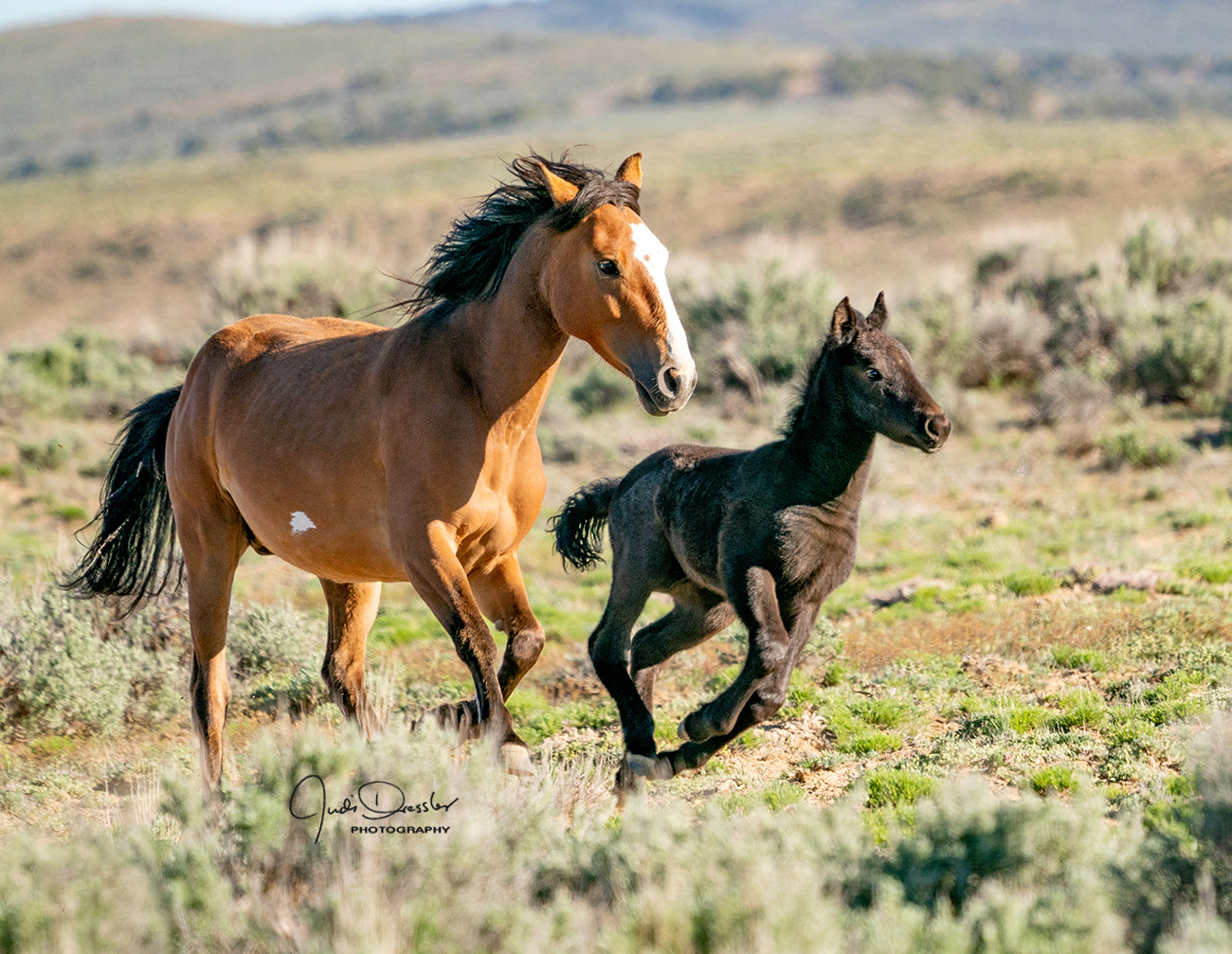 Running Wild Mustangs – Mom And Baby