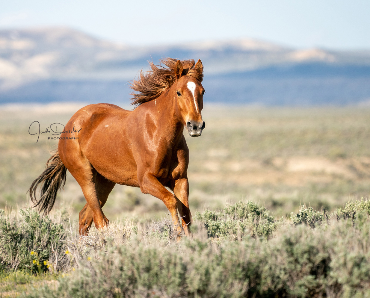 Proud And Free - Wild Mustang Horse