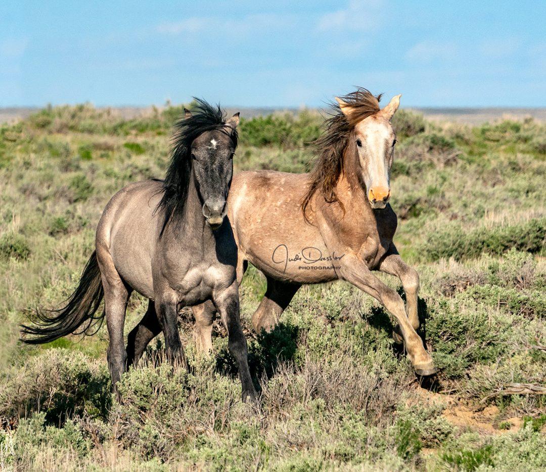 Frisky Horse Pals
