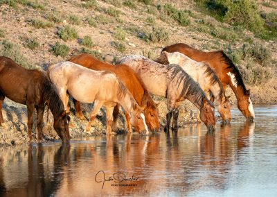 Lineup At The Pond– Wild Horses