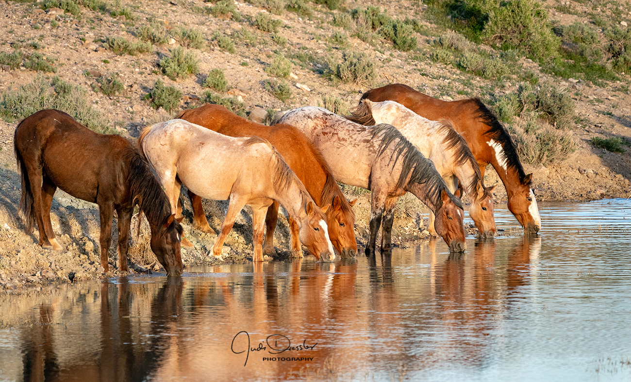 Lineup At The Pond-- Wild Horses
