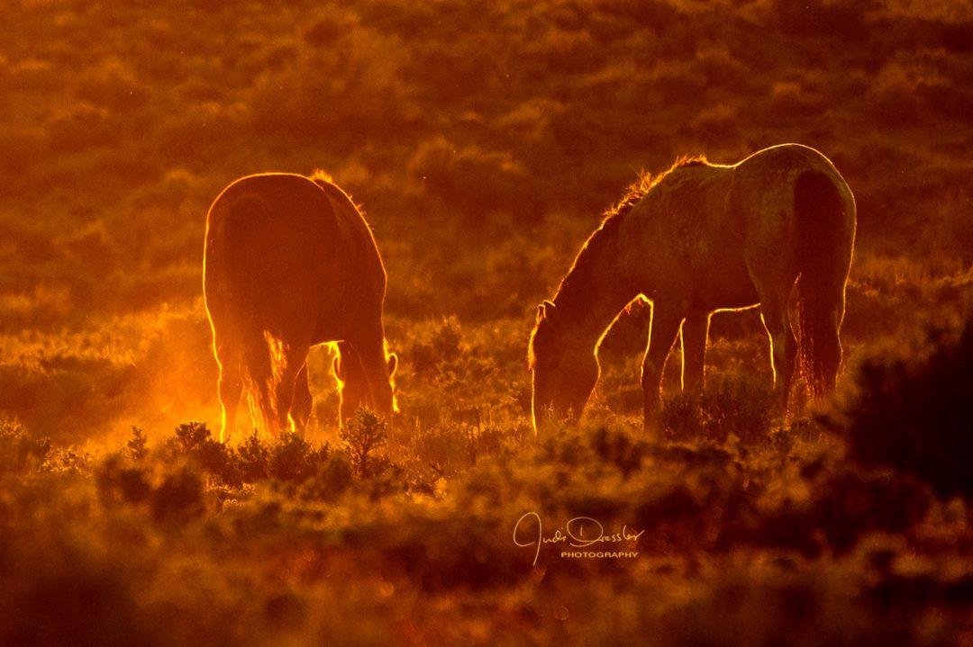 Good Night, Beautiful Mustangs