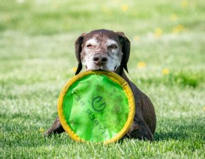 Magic with frisbee